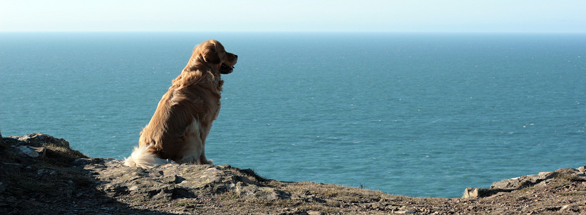 Photograph of Bailey looking out to sea near St Agnes